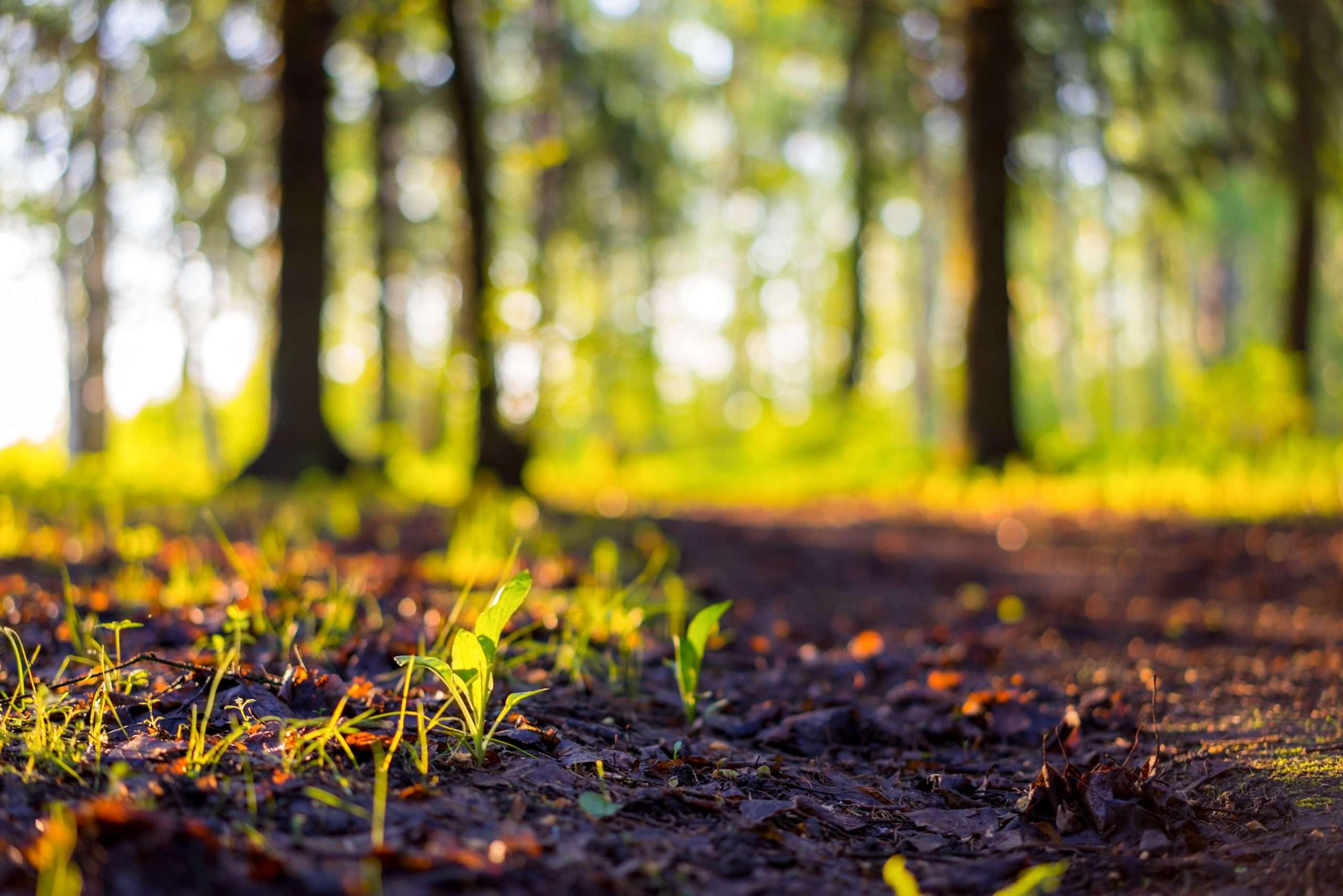 Les projets écologiques se multiplient en France !